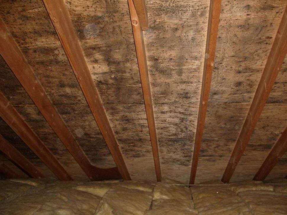 So You Have Discovered Mold In Your Attic Now What
